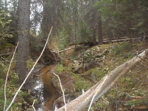 Chessler Creek