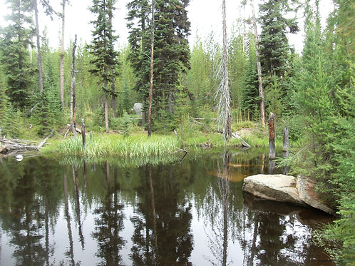 Little French Creek #4