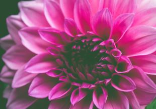 Flowers Bring Joy!