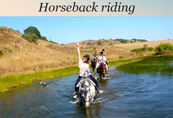 Golan Heights horse riding