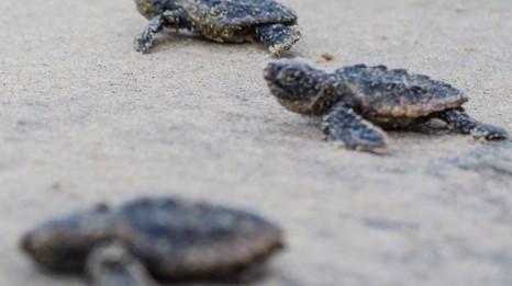 Turtles-19.jpg