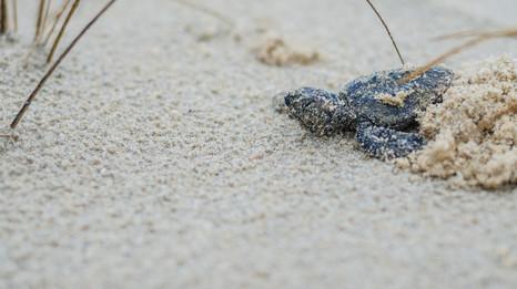 Turtles-2.jpg