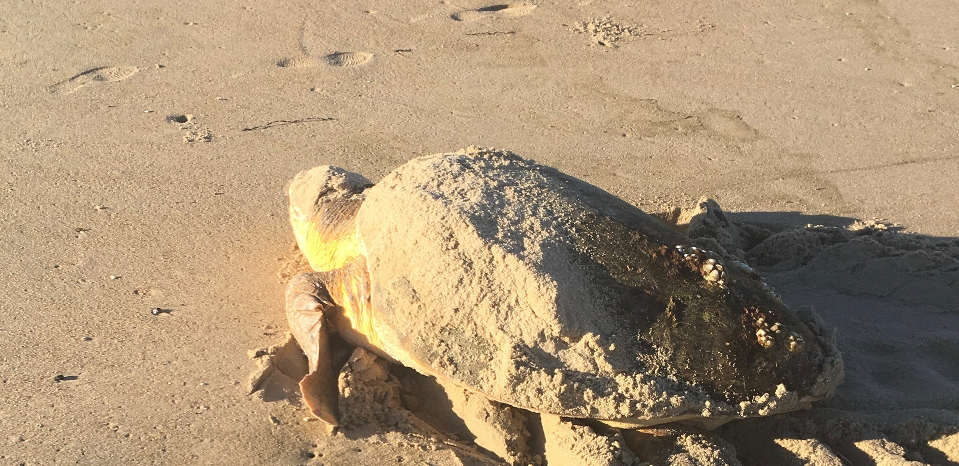 Mother turtle.jpg