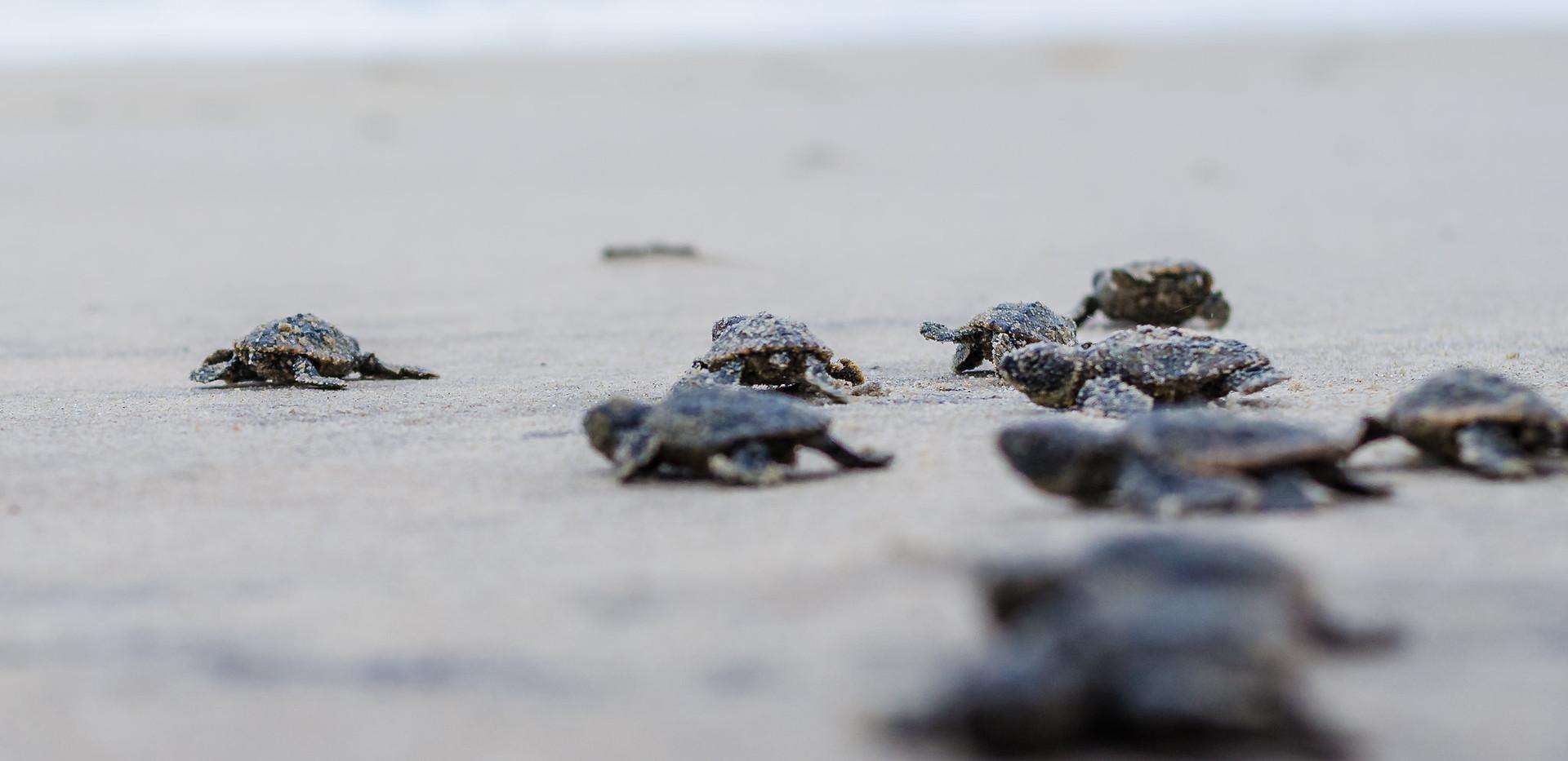 Turtles-20.jpg