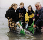 rough toothed dolphin rescue.jpg