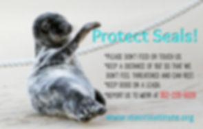 Seal guidelines.jpg