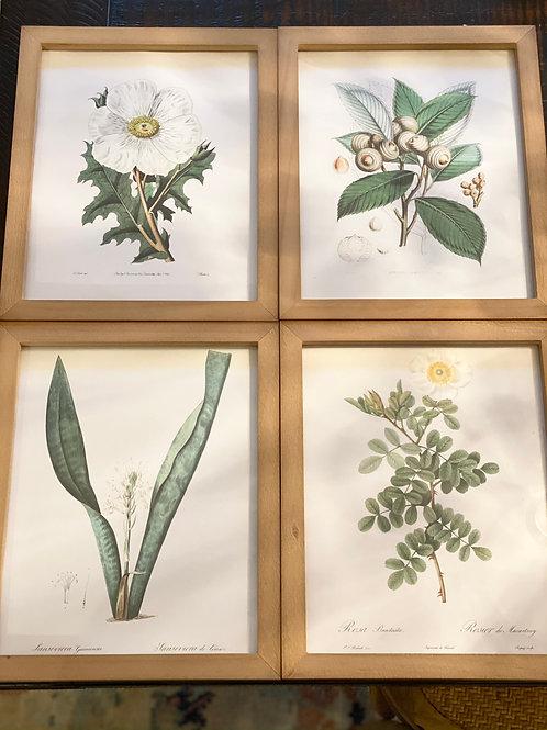 Botanical Framed Set