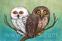 Two cute birds