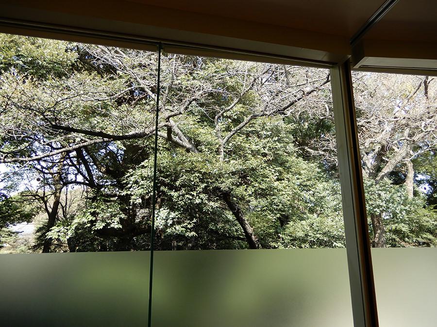 明治神宮 文化館 窓