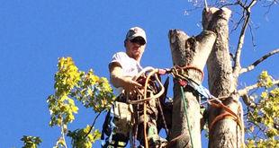 Tree Service_Richard.jpg