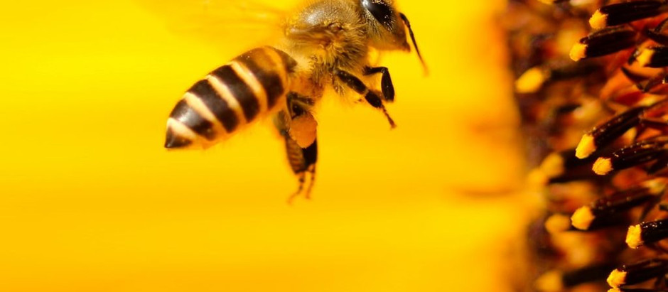 Bee Myths!