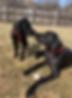 Christa Leigh Bio Dogs