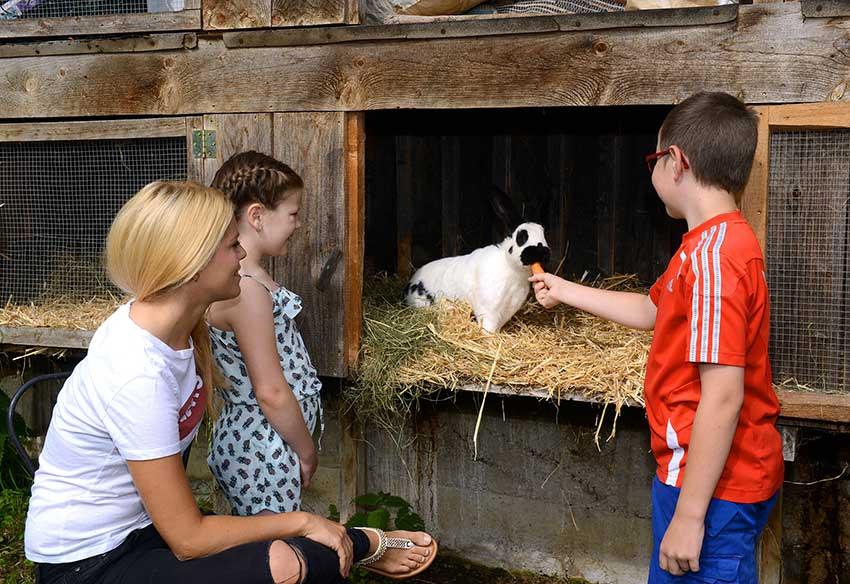 Tiere Urlaub im Stall