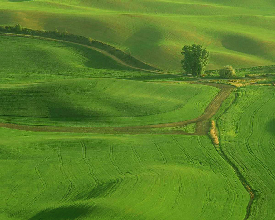 landscape-647.jpg