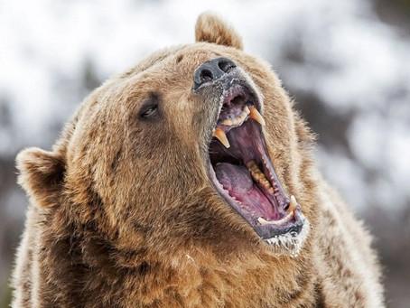 Ne pas chatouiller l'ours, conseil aux Ukrainiens...