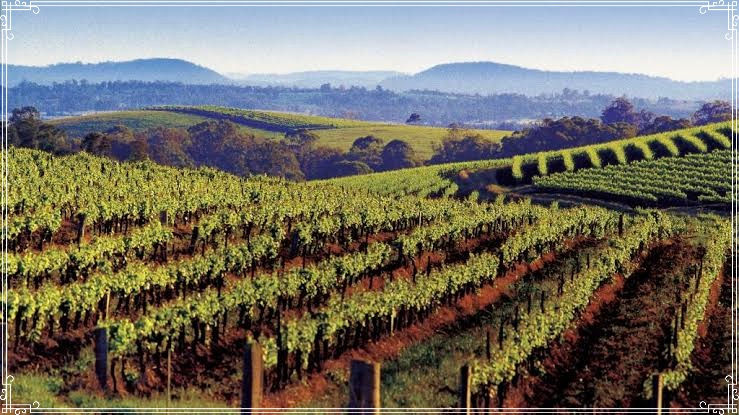 Hunter Valley Food and Wine Lover Tour