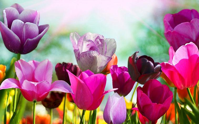 Cute-Spring-Flower-HD-Wallpapers-1.jpg
