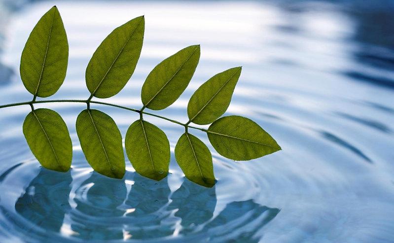 Relaxing leaves, flowing water
