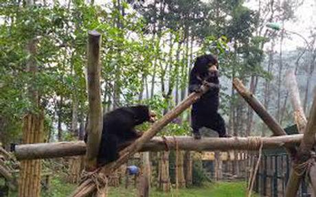 bears 2.jpg
