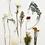Thumbnail: Rush Order - Framed Bouquet