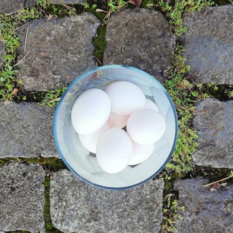¿Cómo teñir los huevos de pascua con plantas?
