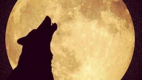 ★ 37 - Nuit de pleine Lune