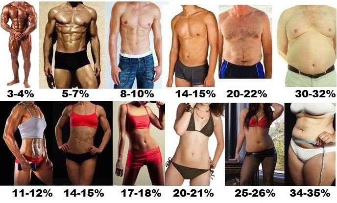 Examples of body fat percentages