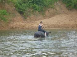 Water buffalo taxi