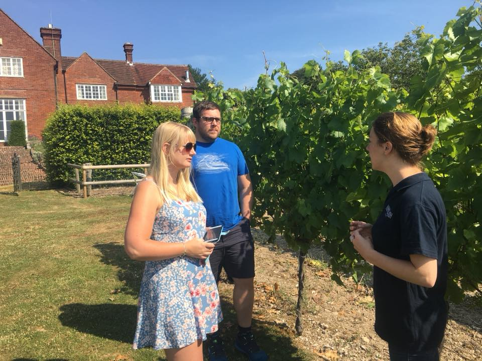 hambledon-wineyard-winery
