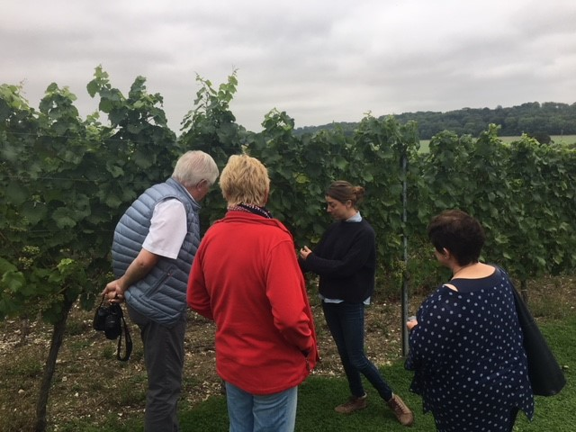 Hampshire Wine Tours