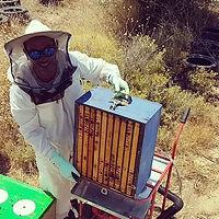 #honeyharvest #thymehoney #spetseshoney