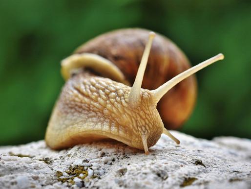 De slak ziet meer van de weg dan de haas