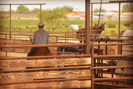 Covered Roping Boxes