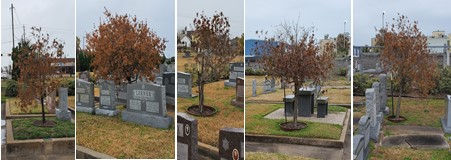 Damaged Trees.jpg