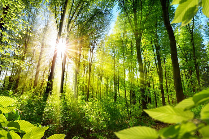 Scenic forest of fresh green deciduous t