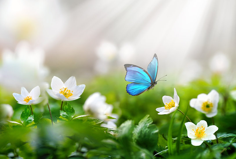 Beautiful spring  background with blue b