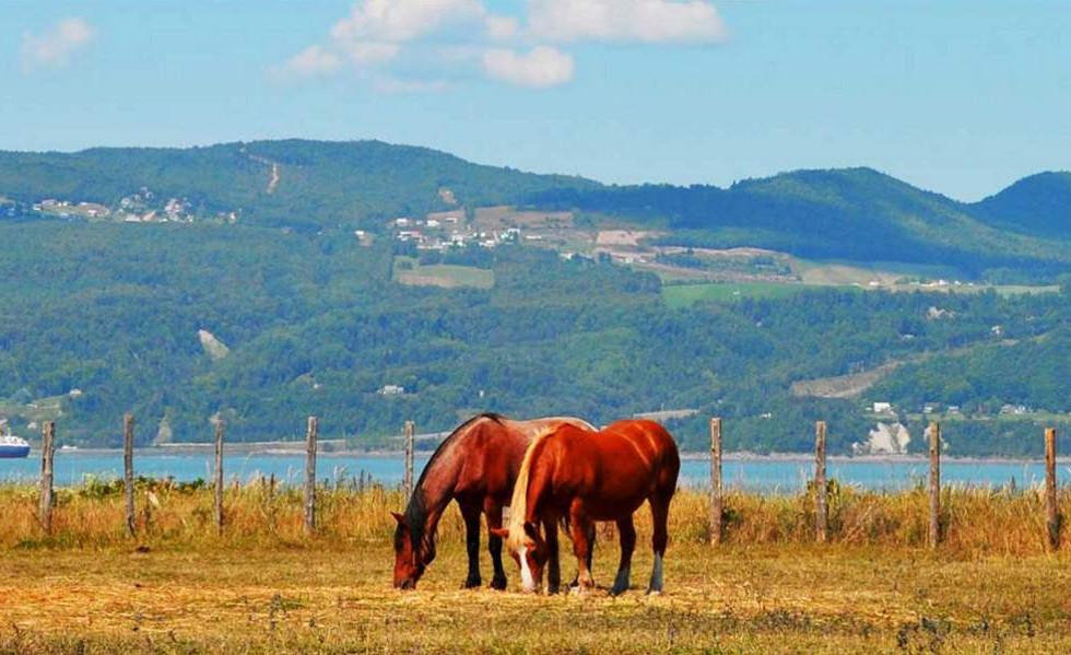 Les chevaux de l'Isle