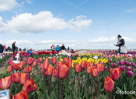 485 soorten tulpen