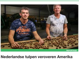 Nederlandse tulpen veroveren Amerika