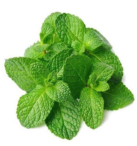Mint Leaves (Box)