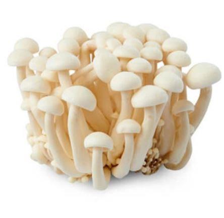 White Shimeji Mushroom