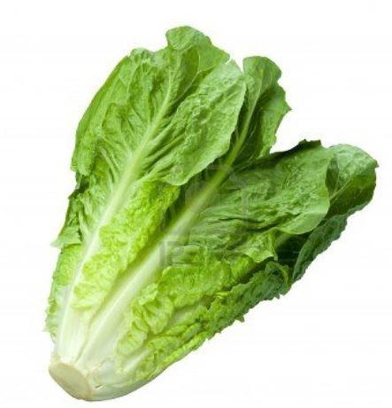 Gem Lettuce (Pcs)