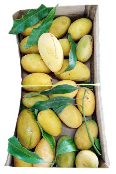 Local Mango UAE Box (7Kg)