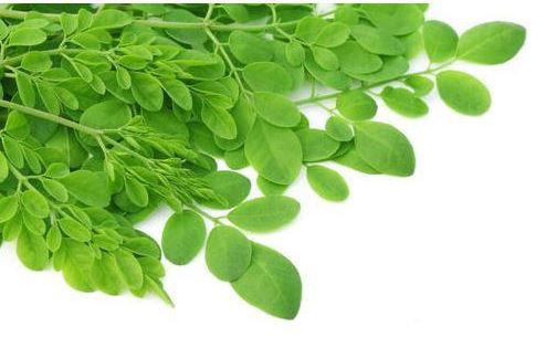 Moringa Leaves (Box)