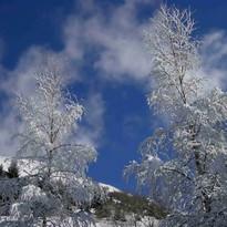 neige sur les arbres.jpg