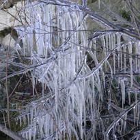 un arbre gelé.JPG