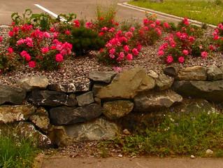 Eine Alternative zu pflegeintensiven Blumenbeeten? Bodendeckerpflanzen!