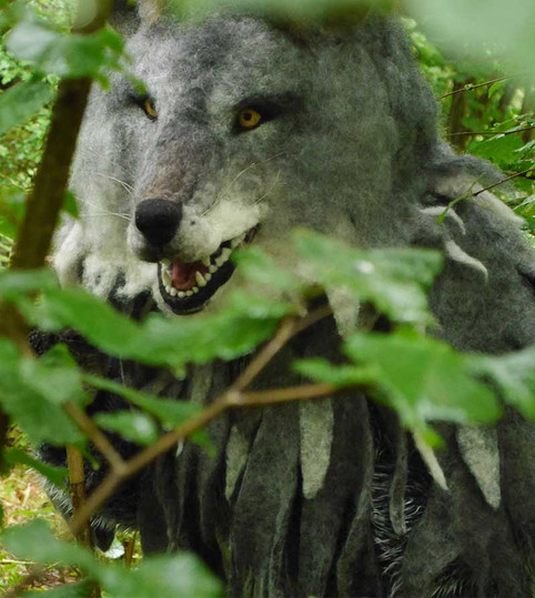 Wolf in the woods: re-wilding