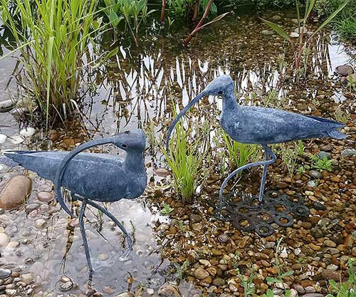 Curlews in the pond