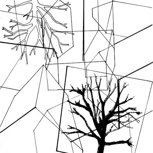 david parsons, plane trees (2018)